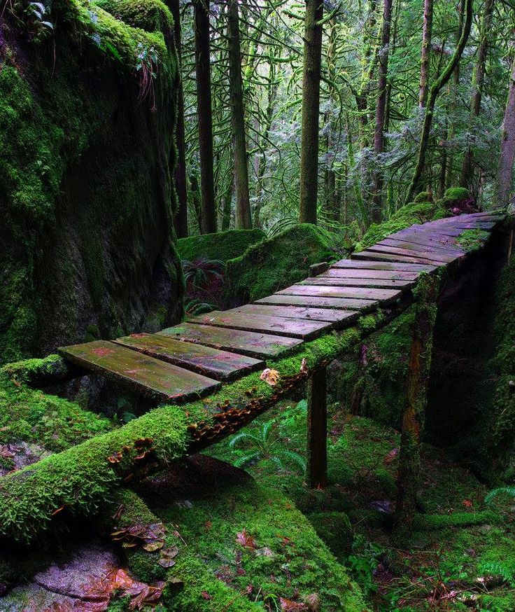 "Bridge to secret places??? ""Trolls"" by Jason Wilde"