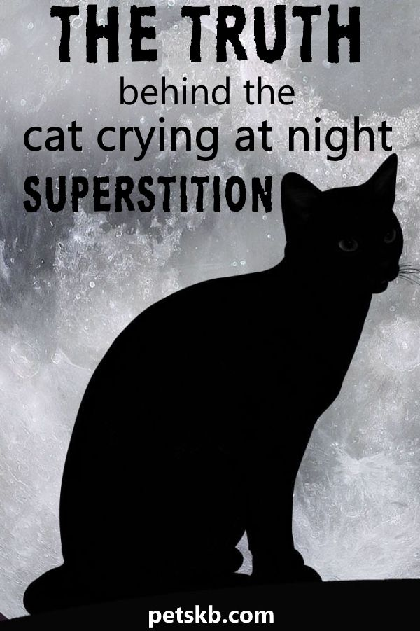 What Is The Cats Crying At Night Superstition Cat Crying