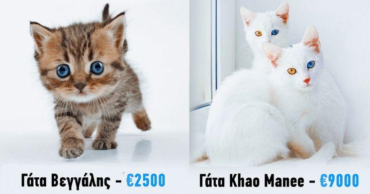 19 γάτες πολυτελείας που κοστίζουν μια ολόκληρη περιουσία. - Τι λες τώρα;