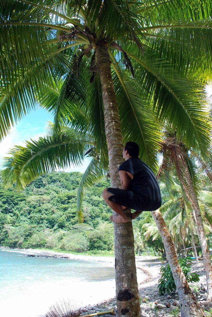 samoa buddhist single men Samoan single men thousands of photos and profiles of men seeking romance,  love and marriage from samoa.
