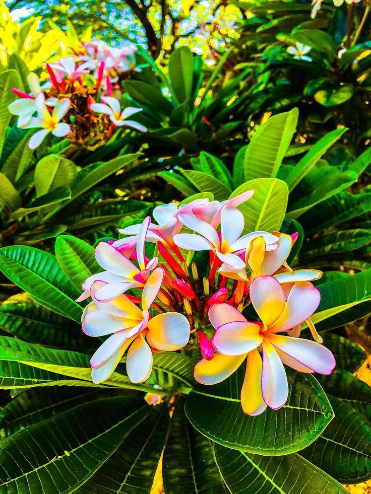 Best 20+ Hawaii Flowers Ideas On Pinterest