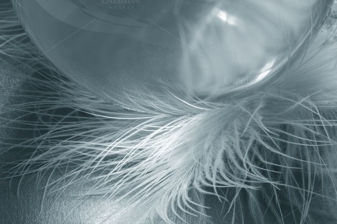 Glass ball bird feather by sanches812 on @creativemarket