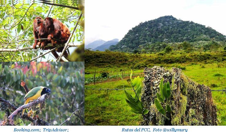 """Dentro del """"Santuario de fauna y flora Otún Quimbaya"""" podemos practicar el Senderismo con recorridos especiales para los turistas; Sendero El Río, Sendero Bejucos y el Sendero El Humedal…."""