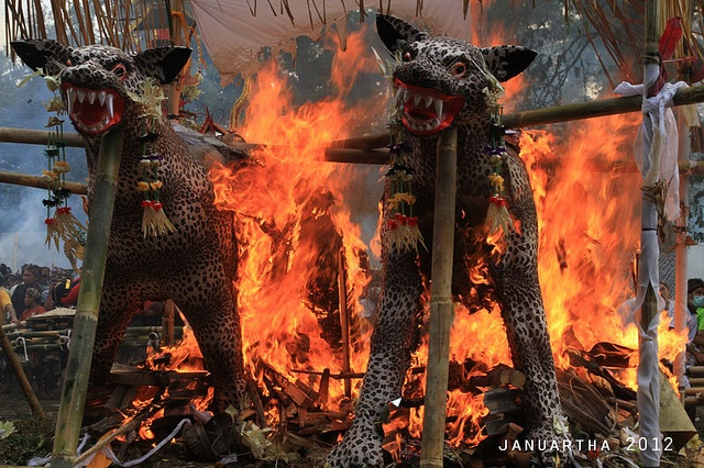 Two 'Leopard' (NOT REAL) burned during mass cremation at Tampaksiring | Bali, Indonesia