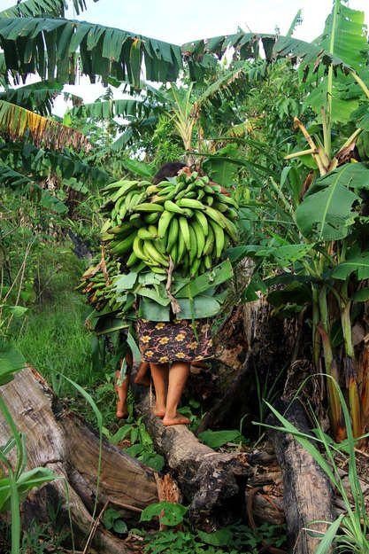 """Los matsés también cultivan una amplia variedad de vegetales en sus huertos, entre ellos algunos alimentos básicos como plátanos machos y yuca.  """"No comemos alimentos de la fábrica, no compramos cosas. Por eso necesitamos espacio para cultivar nuestra propia comida"""", dice Antonina Duni, una mujer matsés."""