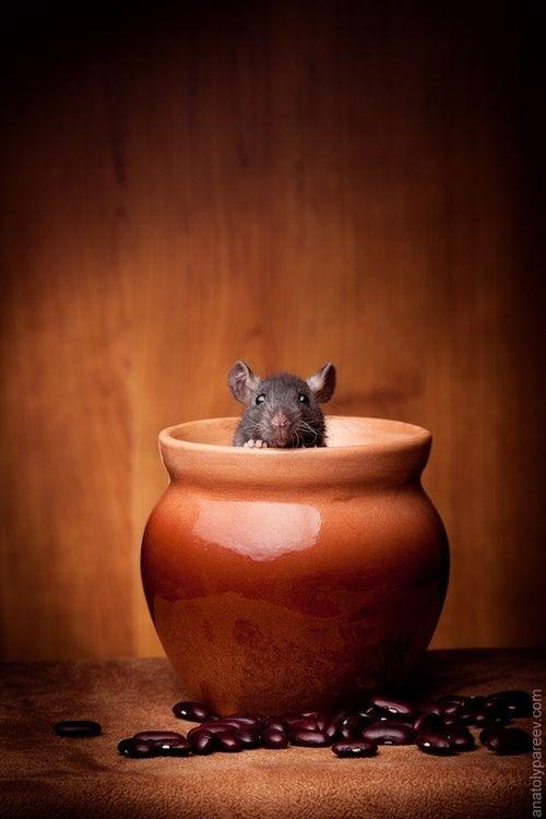 Ready to taste my dish Ratatouille !!!