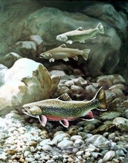 Trout fishing basics techniques tips and tackle my for Trout fishing basics