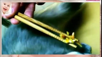 Funny Cats Eating with Chopsticks, So lovely - http://dailyfunnypets.com/videos/cats/funny-cats-eating-with-chopsticks-so-lovely/ - funny videos, funny animals, funny football, funny clip, funny dog, funny dance, funny baby, funny babies, funny game, funny girl, funny face, funny people, funny trip, funny lady, funny farm - animals, cats, funny
