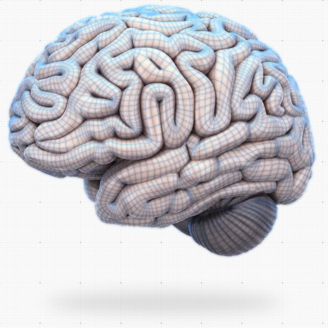 a look at the different sections of the brain and their functions Psychology quiz: brain parts and functions  parts of the brain and their functions 26 terms the brain - parts & functions 31 terms.
