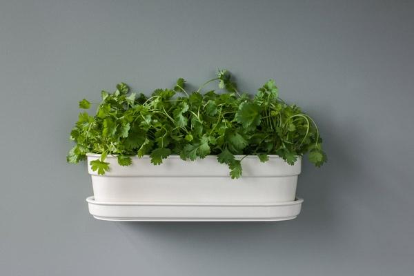 Herbivore Indoor Planter (with Stelf shelf) specifically designed to accommodate three standard super market herb plants