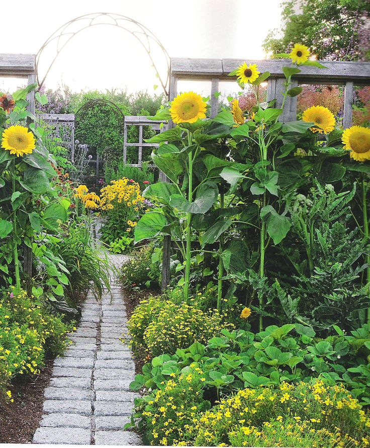 Along the brick path through the vegetable garden, bloom sunflowers, marigolds, and black-eyed susans.