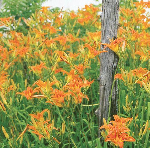 Les 25 meilleures id es de la cat gorie jardin h m rocalle - Plante exterieur sans soleil ...