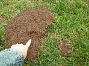 Gopher trappers in Mira Loma, California #trapper #mira_loma #california