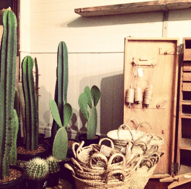 The night before we opened | Setting up our first lot of Cacti which proved VERY popular | See more @little_rae_berry on Instagram |