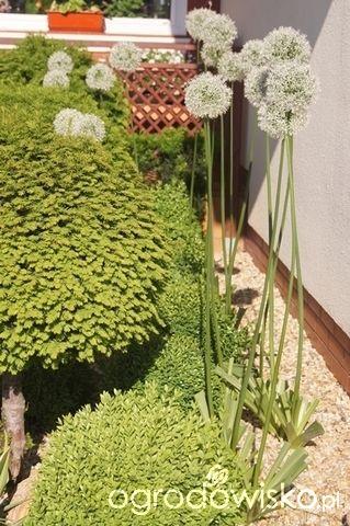 Ogród Małej Mi - sezon 2015 - strona 245 - Forum ogrodnicze - Ogrodowisko