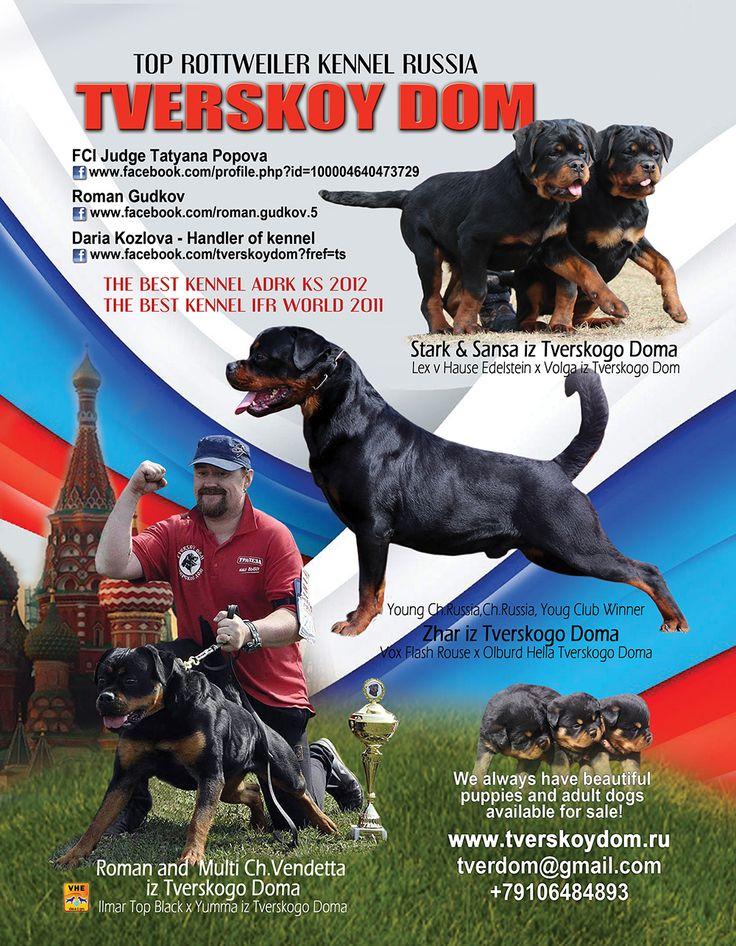 Tverskoy Dom Rottweilers Top Rottweiler Kennel - Russia FCI Judge Tatyana Popova & Roman Kozlova tverdom@gmail.com 79106484893 www.tverskoydom.ru