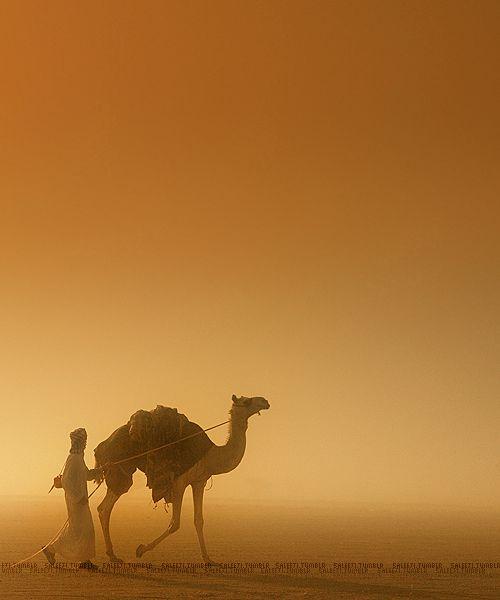 Horse and rider, desert