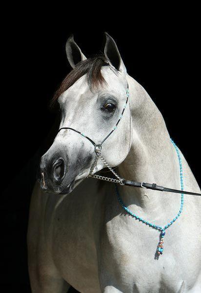 pur sang arabe arabian horse cheval arabe collier bijoux necklace