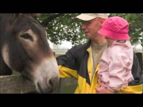 The Donkey Sanctuary of Canada, Guelph Ontario - YouTube