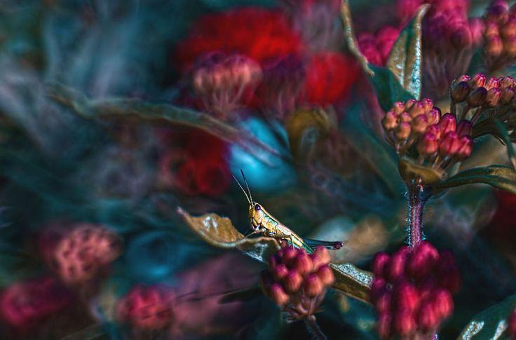 15 Beautiful Macro Photography That Will Make You Enjoy The Macro World | Inspired Magazine
