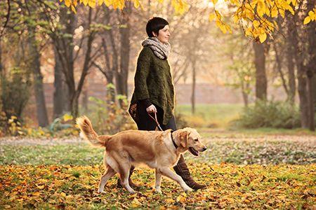 La passeggiata con Fido fa piacere a lui e fa bene a voi!  Scopri i nostri #consigli: http://www.dimmidisi.it/it/dimmicomefai/stare_in_forma/article/una_passeggiata_nel_parco_con_fido.htm - #dimmidisi #benessere #salute #fitness #cane #dogs #animali #natura
