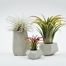 """Képtalálat a következőre: """"ceramic plant pot minimal"""""""