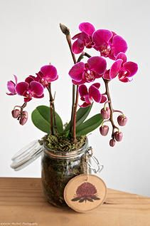Bloodwood Botanica | Orchid in recycled Jar