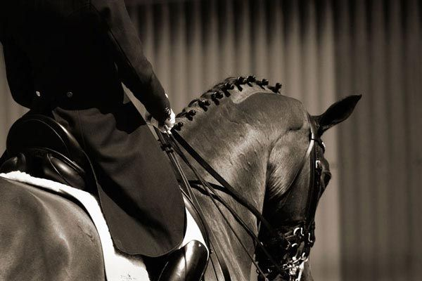 Dressage: Equine Therapy, Hors Photographers, Beautiful Hors, Horses Mi, Horsesmi Life3, Dressage Horses, Equestrian Life, Photographers Interview, Hors Photography