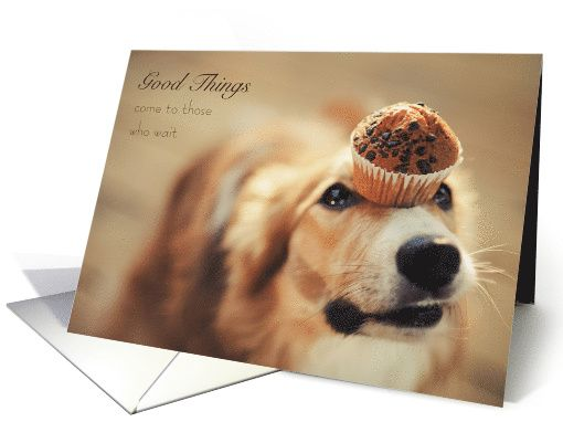"We all know how hard it is to wait for something that you really want! It can be torture like this obedient golden retriever with a delicious chocolate chip muffin perched on his head just waiting, waiting, waiting for his master to say ""ok"".  Send this cute card to someone who needs some encouragement that good things DO come to those who wait and it will be so worth it!  by M. Rosso at GreetingCardUniverse.com #anycardimaginable"