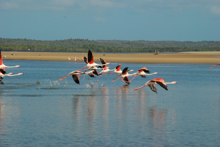 Flamingos at Pomene
