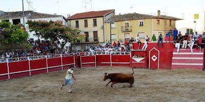 Santacara: Vacas de Jose Arriazu - Fiestas de Santacara
