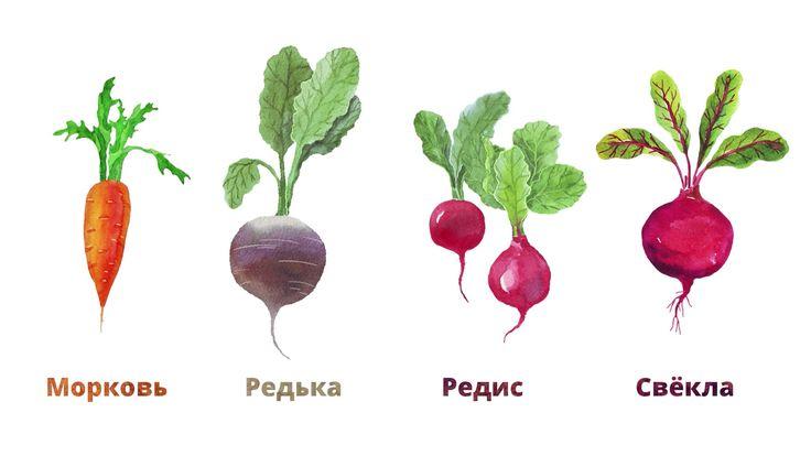 28.4. Овощи. Корнеплоды и бобовые
