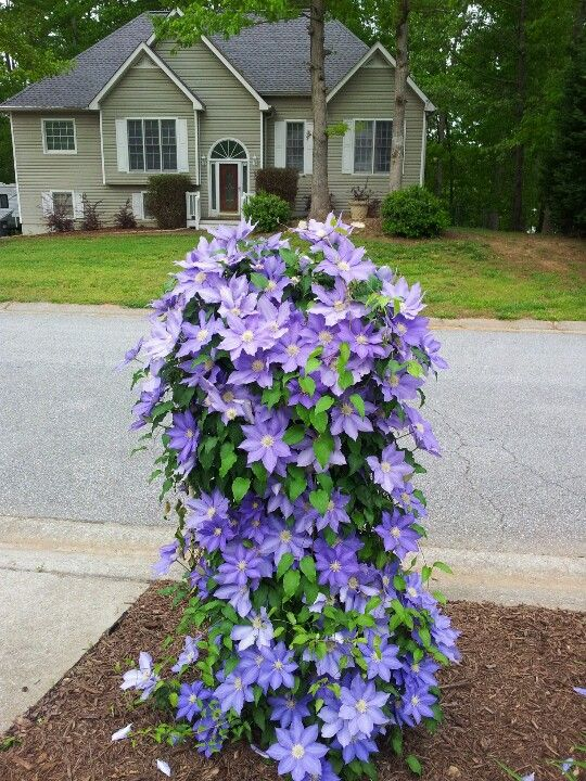 1000 Images About Mailbox Garden Ideas On Pinterest