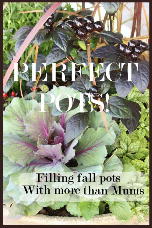 This lady arranges potted plants like you would a floral arrangement. LOVE the idea of companion planting for aesthetic purposes!!!