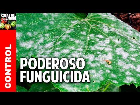 El fungicida casero más antiguo del mundo   Plantas