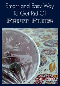 Smart And Easy Way To Get Rid Of Fruit Flies ~ Who knew it could be so easy to trap these pesky little bugs?