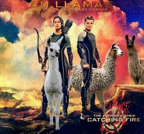 Lol haha funny pics / pictures / Hunger Games Humor / Catching Fire / Katniss / Peeta / Llamas / Animals