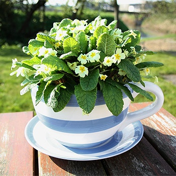 17 Best Images About How Does My Garden Grow On Pinterest Ovens Tea Cups And Strawberry Plants