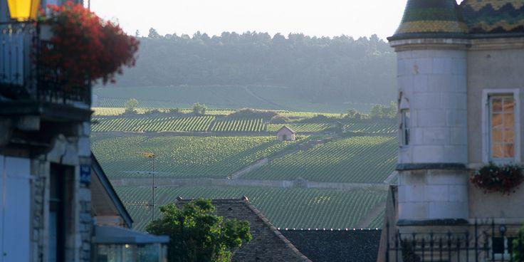 Die besten Chardonnays kommen aus dem Gebiet rund um Meursault. Behaupten die örtlichen Winzer. Das ist aber nicht die ganze Wahrheit.