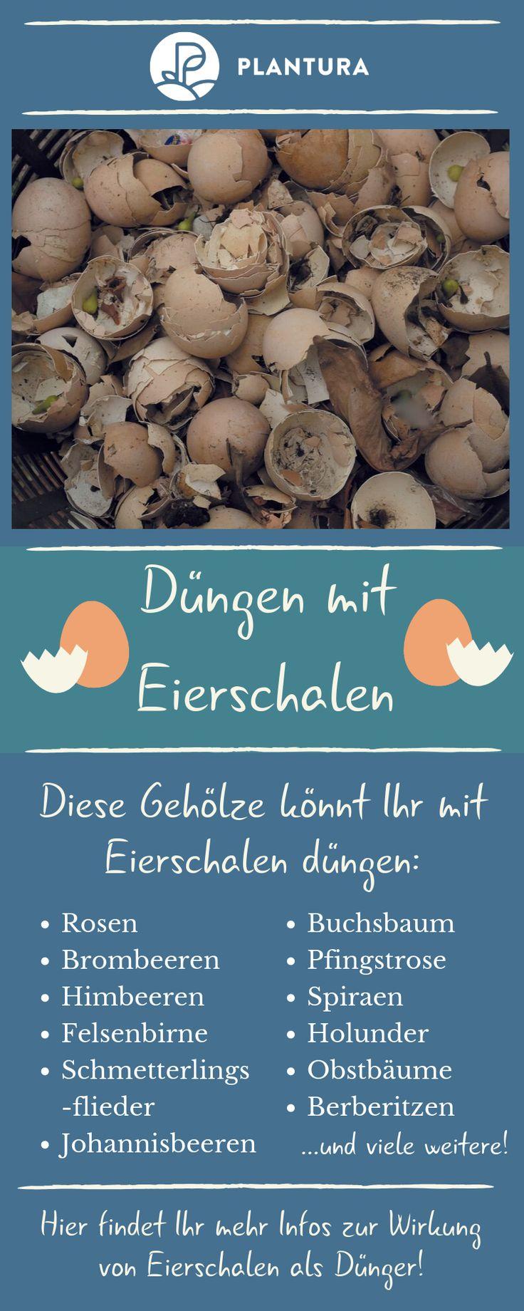 Eierschalen als Dünger: Anwendung & Wirkung