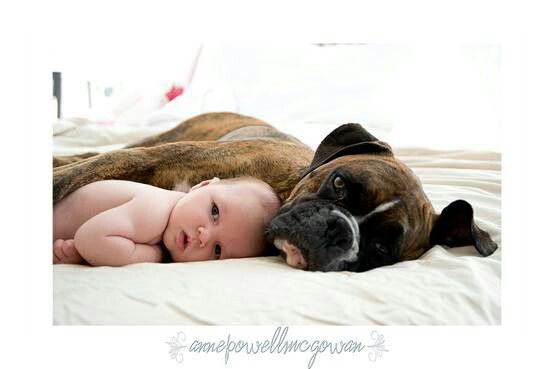 Boxer and baby.  We have to do this with Baby B and Lexis!