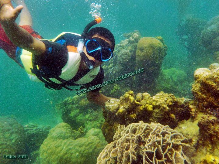 Snorkeling Pulau Putri Pulau Seribu