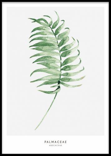 Affisch / poster med grönt palmblad. Fina botaniska växter och blad. Stilren poster med grå bakgrund.