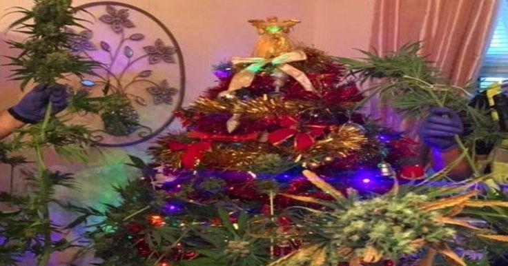 Βρετανία: Βρέθηκε χασισόδεντρο καμουφλαρισμένο σε... χριστουγεννιάτικο δέντρο μετά από έφοδο σε σπίτι
