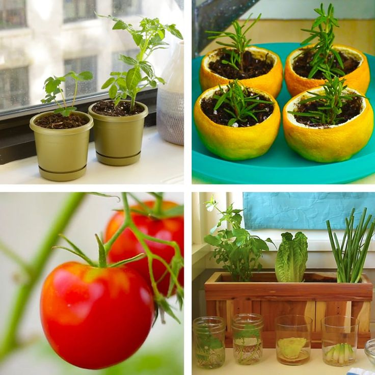 Make your own kitchen garden with these awesome hacks for Make your own indoor garden