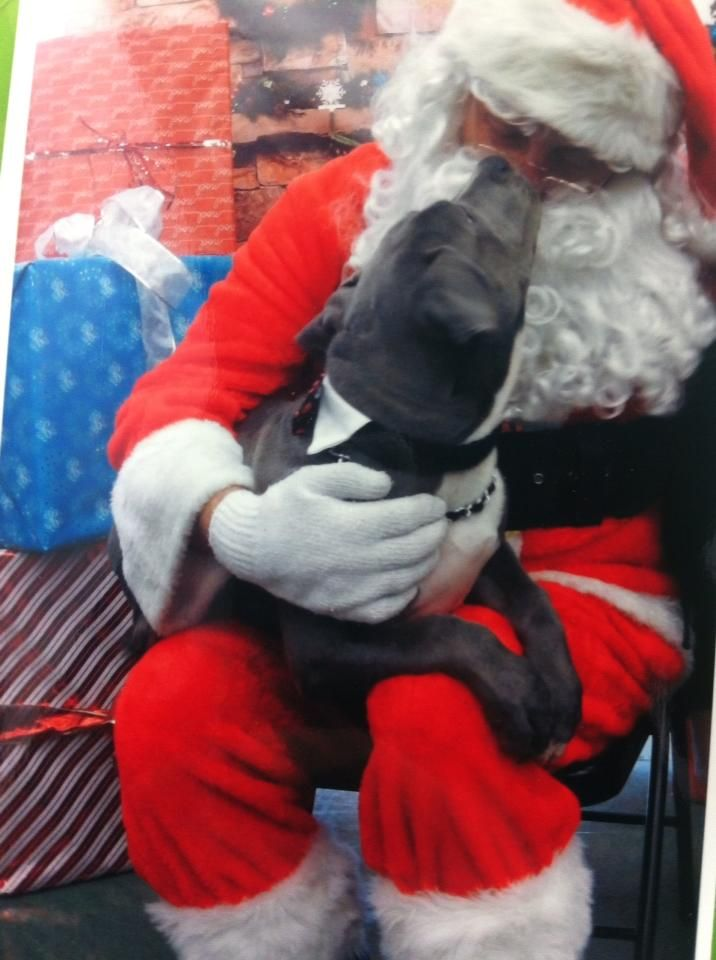 Thank you to Jeanie NaBottle for sharing this photo of her pup with Santa at Petco.