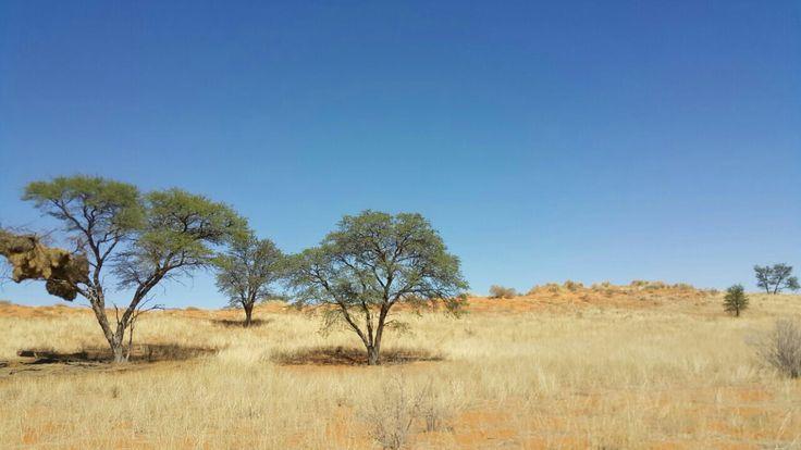 South Africa, Kgalagadi Transfrontier Park