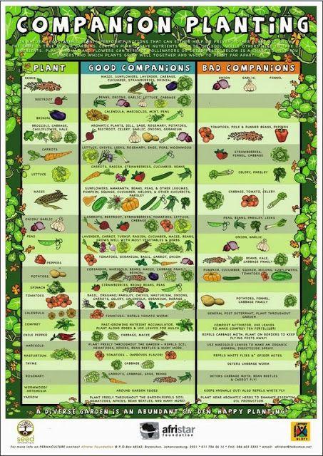 Best Fertilizer For Vegetable Garden