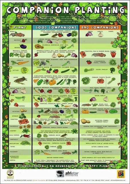 17 Best ideas about Organic Gardening on Pinterest Gardening