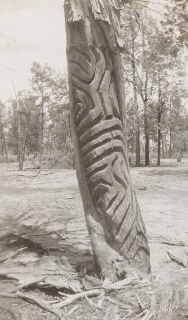 Carved trees--Wiradjuri Country--Album 11: [Photographs of Aboriginal rock art and stencil art, stone tools and landscapes], ca. 1925-1944 / compiled by C. C. Towle      For more information on this image http://acms.sl.nsw.gov.au/item/itemDetailPaged.aspx?itemID=874413    Search our collections at http://www.sl.nsw.gov.au/